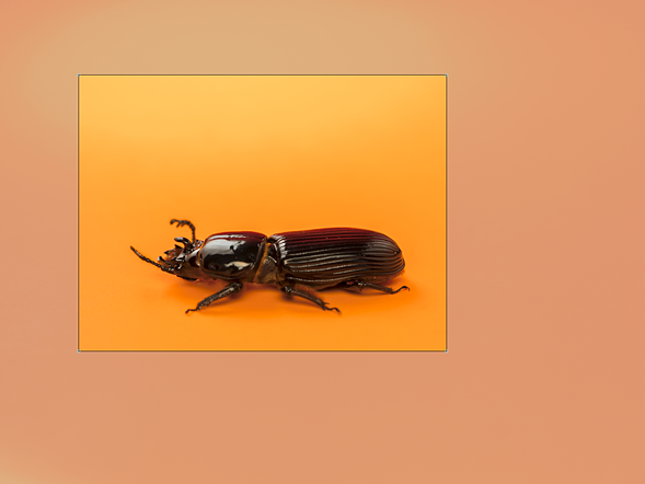 Сахарный жук-палеотида (sp. passalid), снятый в зоопарке насекомых Кетчума, Айдахо