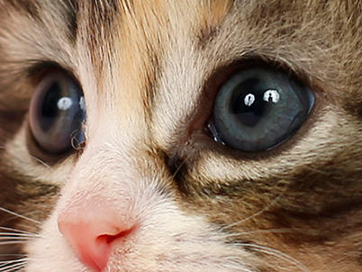 как фотографировать котят