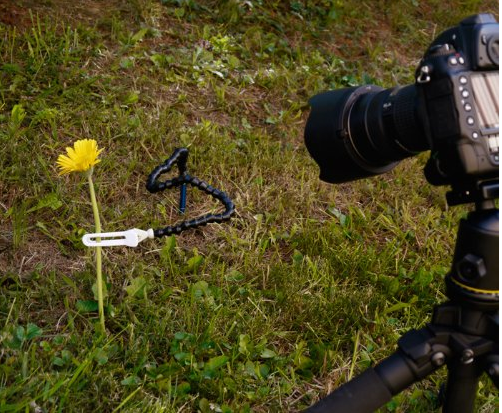 как фотографировать цветы