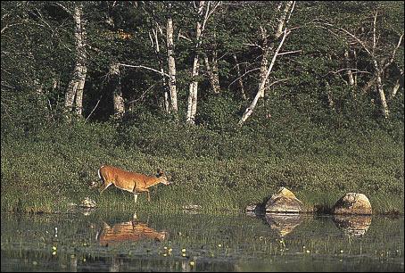 как фотографировать дикую природу