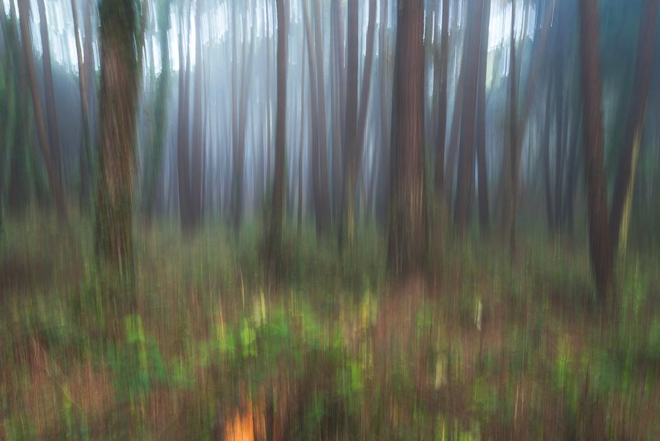 как фотографировать лес