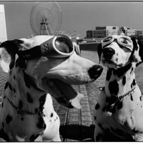 photo by Elliott Erwitt