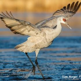 Как получить качественные изображения птиц