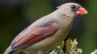 Как фотографировать птиц. Птичья фотостудия Тони Нортропа