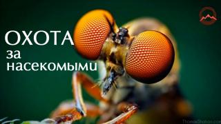 Охота за насекомыми