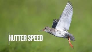 """Как фотографировать птиц, которые """"со свистом"""" проносятся мимо вас?"""