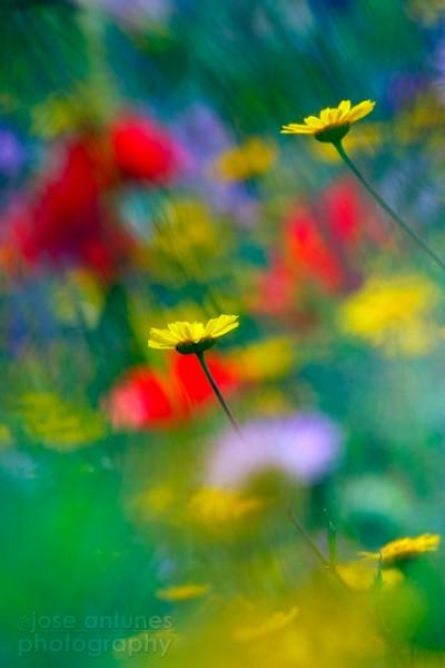 Опустившись на колени, можно получить совершенно другую точку съемки, непривычные для цветочного фото, что позволяет открыть новые горизонты в данном виде фотографирования.