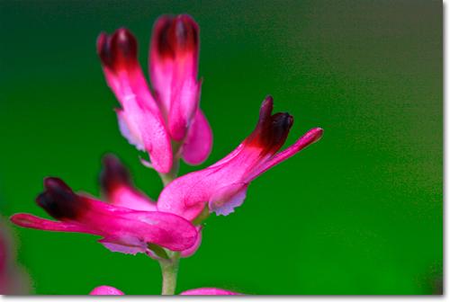 Встаньте на колени или даже лягте на землю – попробуйте найти все возможные варианты отношения между основным объектом и окружающей средой, потому что даже самый лучший цветок не будет восприниматься без правильного фона.