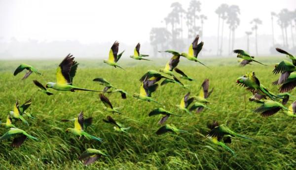 Фото: Muraleetharan Rajasuntharam