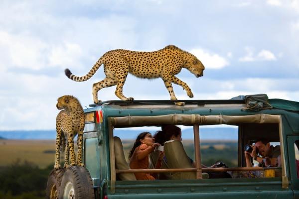 Фото: Yanai Bonneh Место: Национальный парк Масаи Мара, Кения