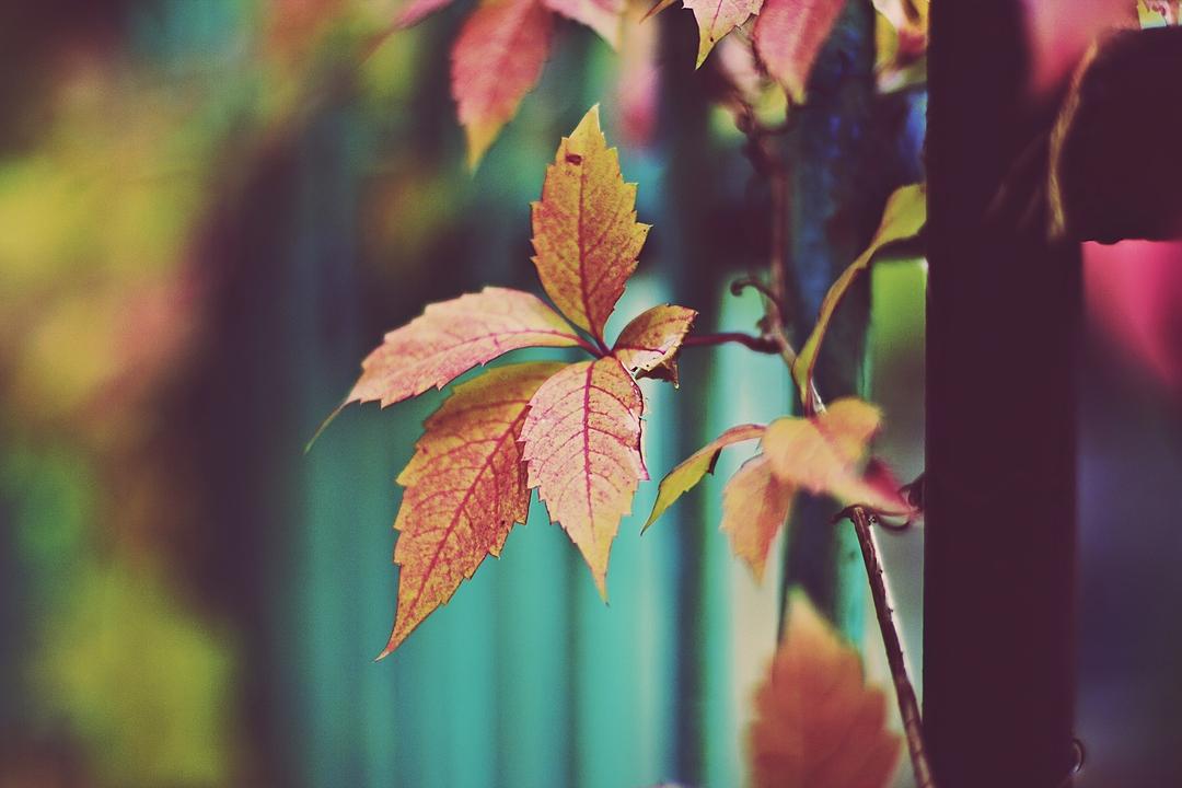 Осень на ваших фотографиях