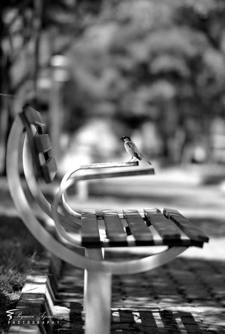 ©Peyman Az