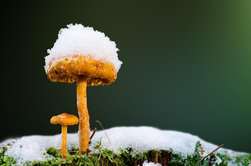 Тихая фотоохота. Как фотографировать грибы