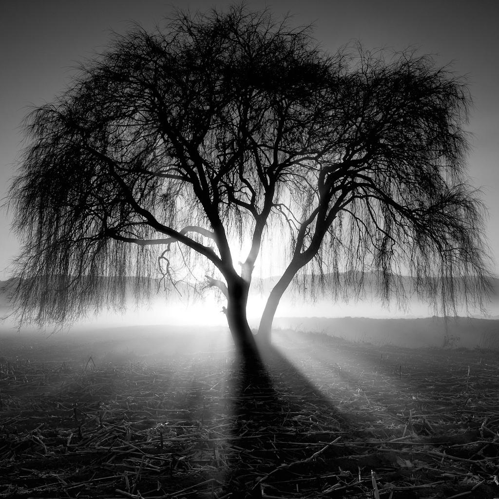 фотография силуэтов деревьев
