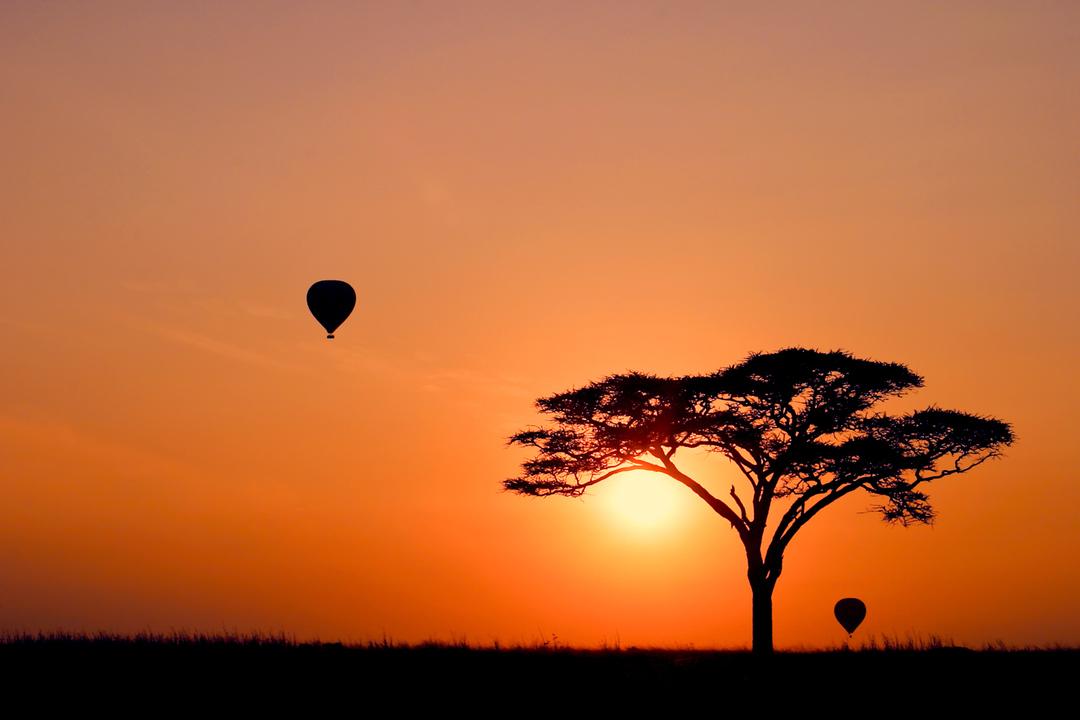 красивая фотография дерева