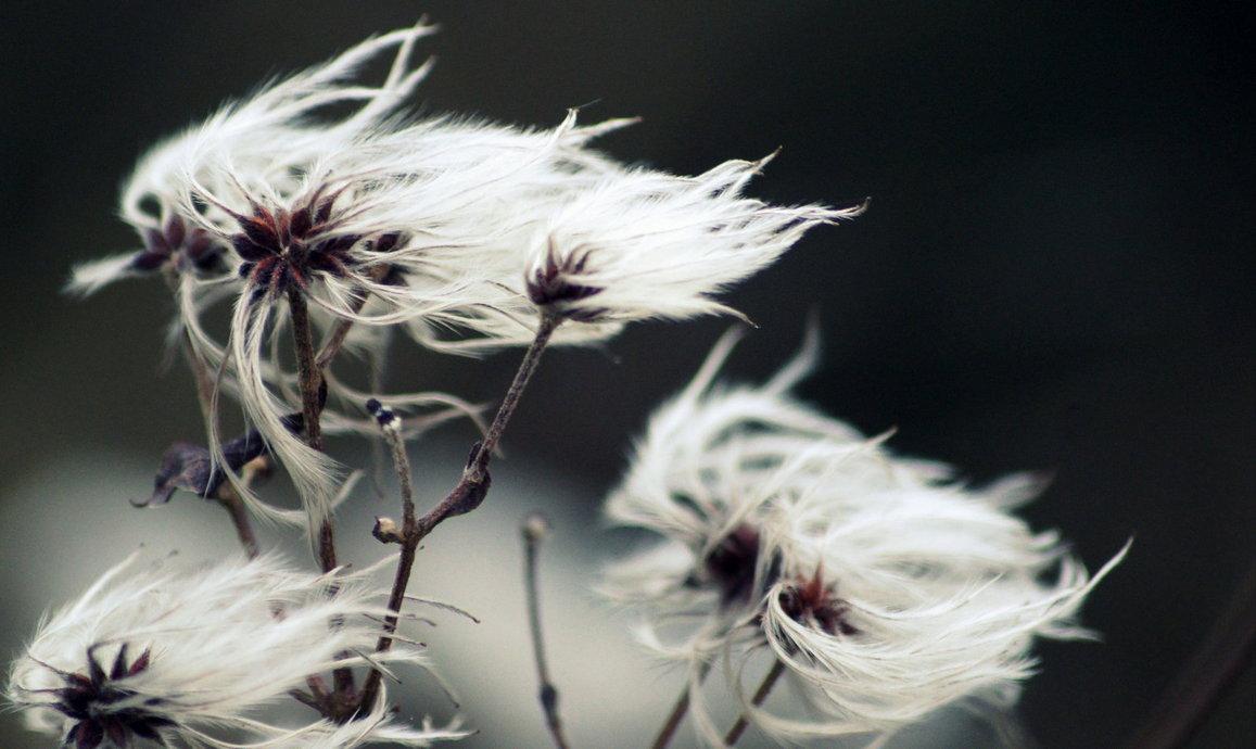 фотографировать цветы