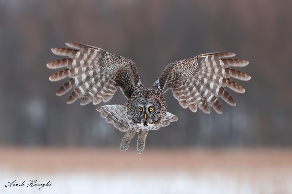 красивая фотография летящей птицы