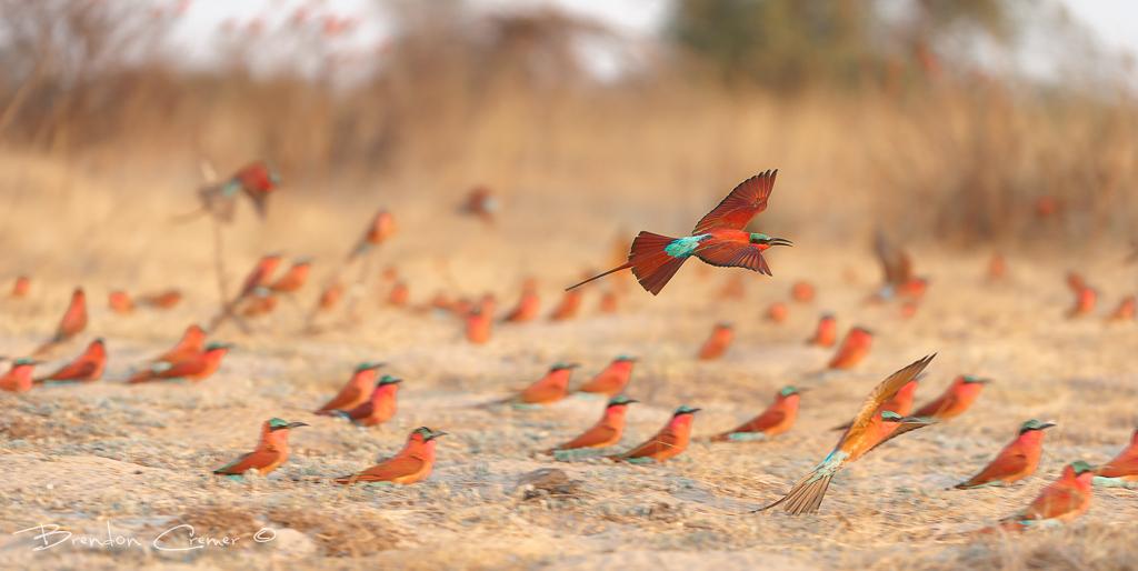 как сфотографировать много птиц одновременно