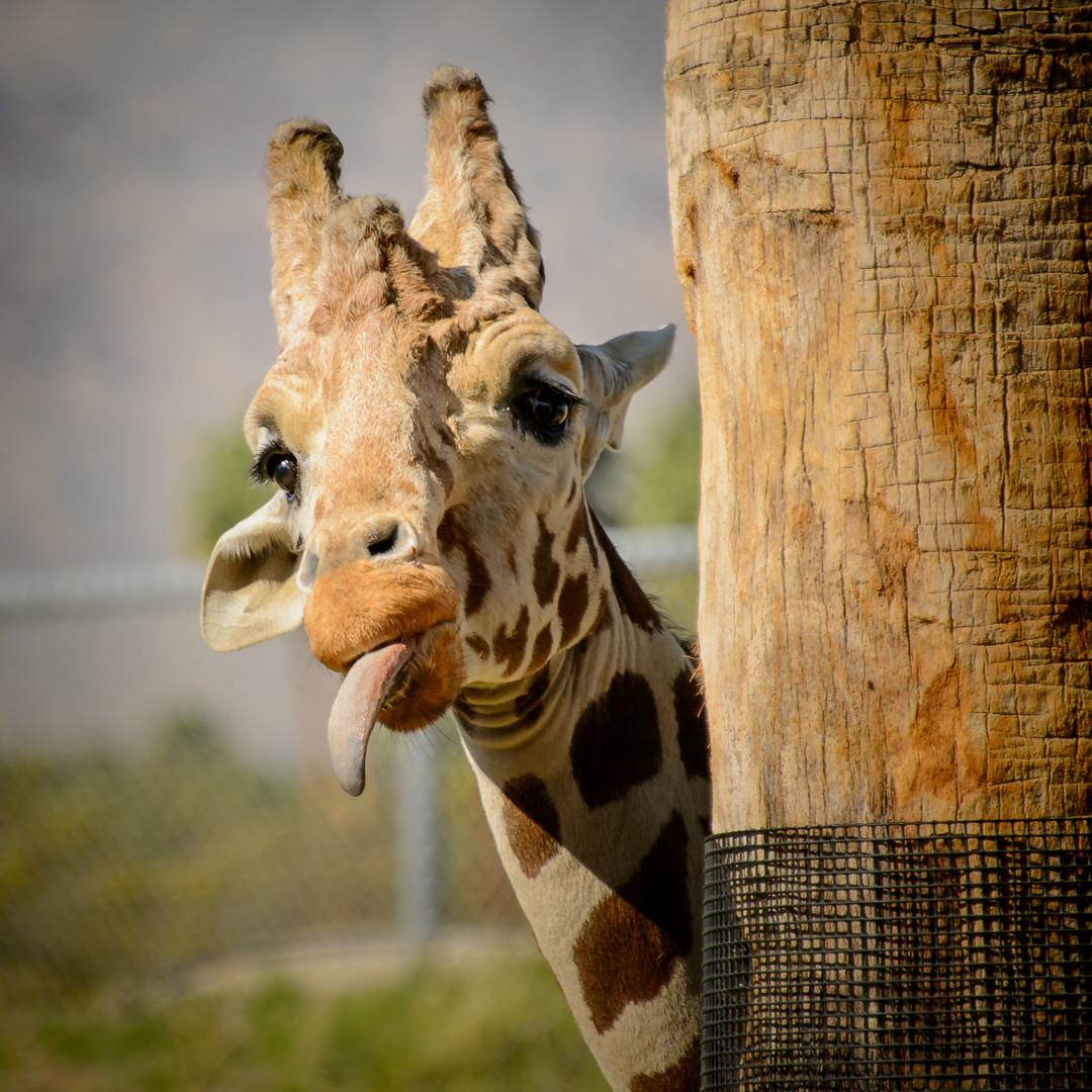 как сделать красивую фотографию в зоопарке