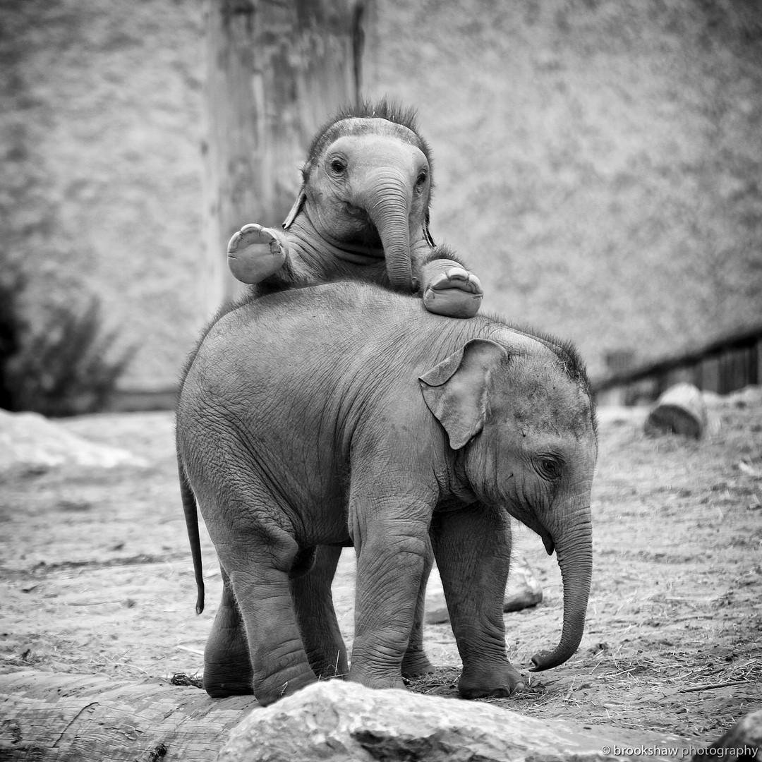 фотографии в зоопарке