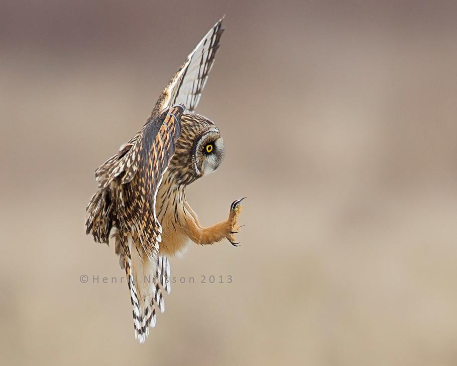 скорость слежения автофокуса за летящими птицами