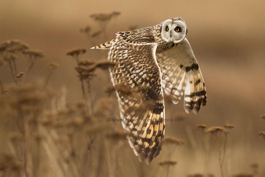 фото птицы в полете на пестром фоне