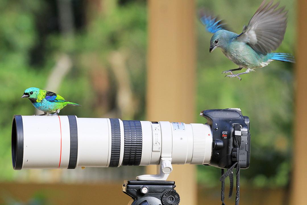 как фотографировать птиц в полете