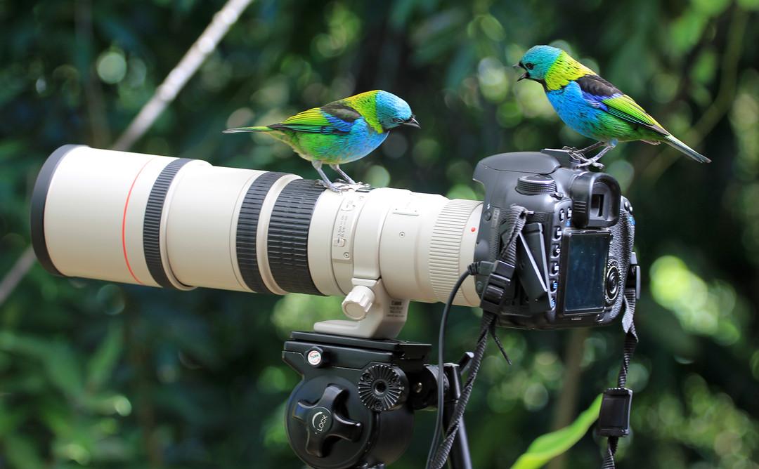 чем фотографитьвать птиц