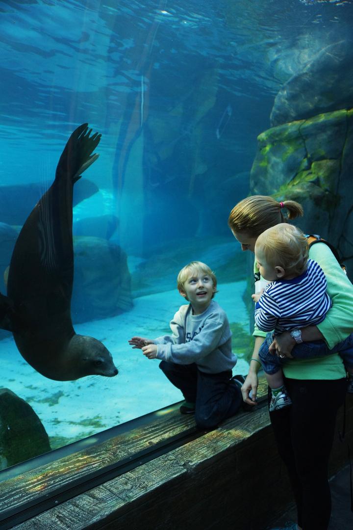 как фотографировать людей в зоопаркекак фотографировать людей в зоопарке