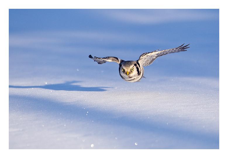 правила фотографирования птиц