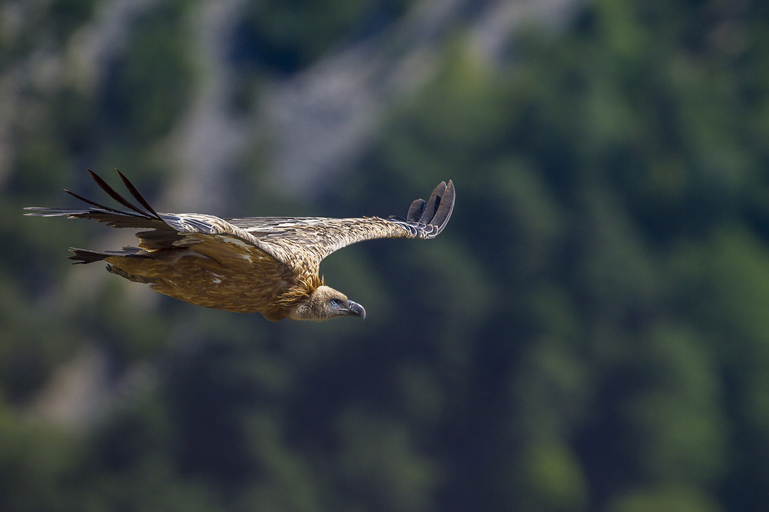 фотография птицы в полете
