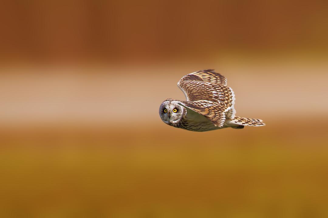 фотографии птицы в полете