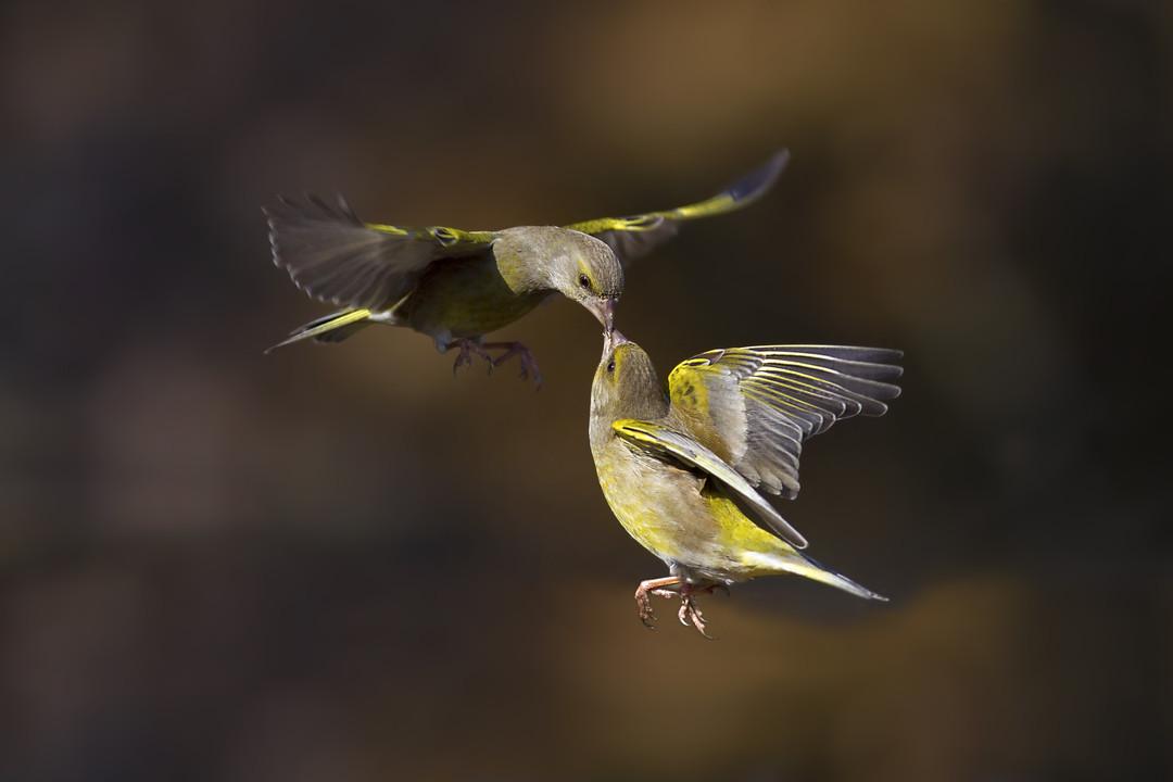 фотографии парящих птиц