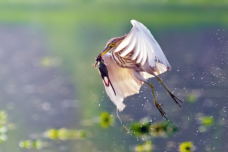 фотографии птицы на охоте