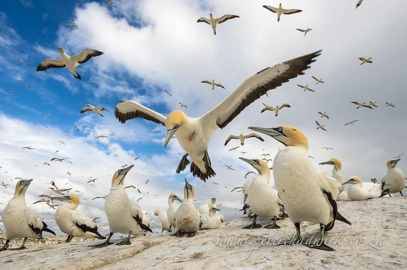 фотографии птиц на фотоохоте