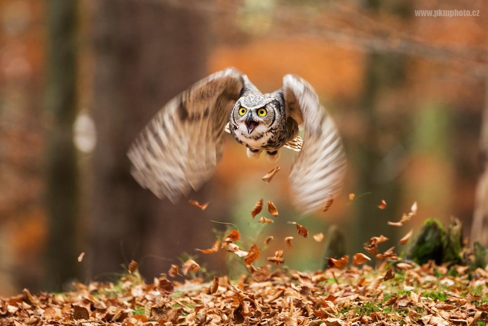 фотография приземляющейся птицы
