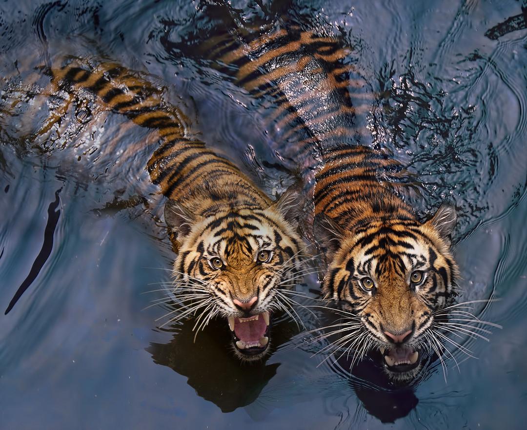 как фотографировать животных в зоопарке