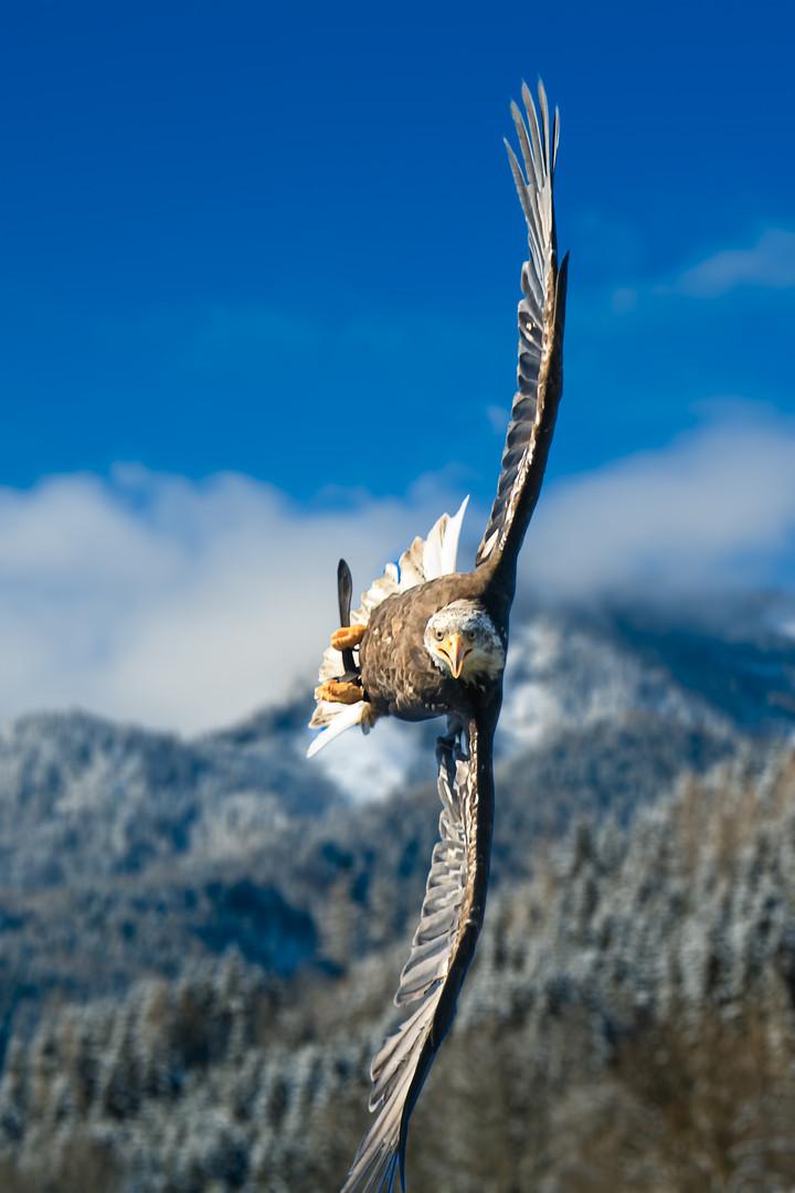 фотография полета птиц