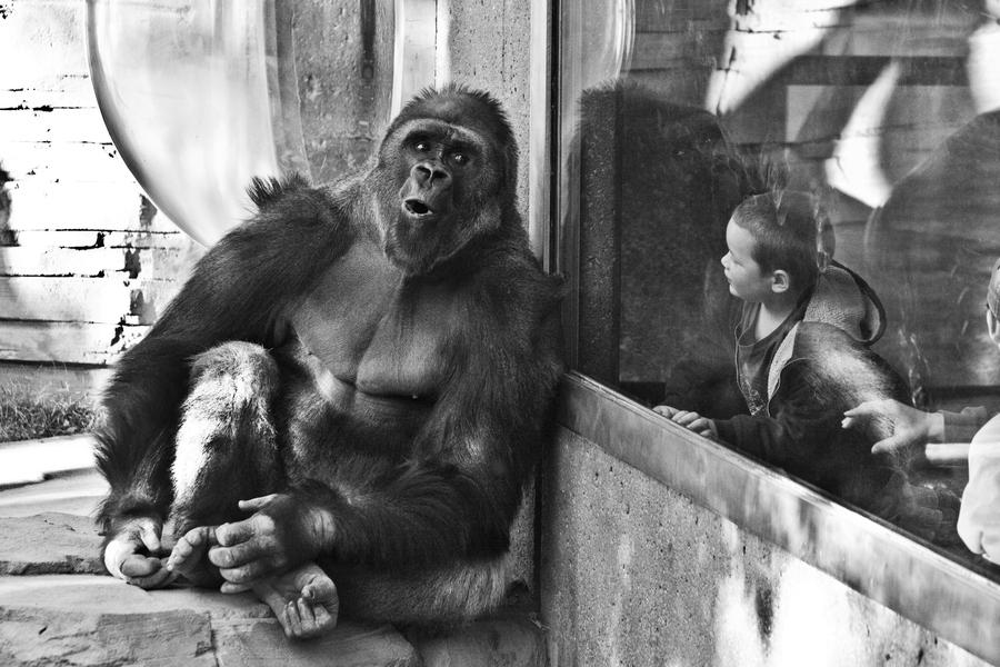 как правильно фотографирвать через стекло в зоопарке
