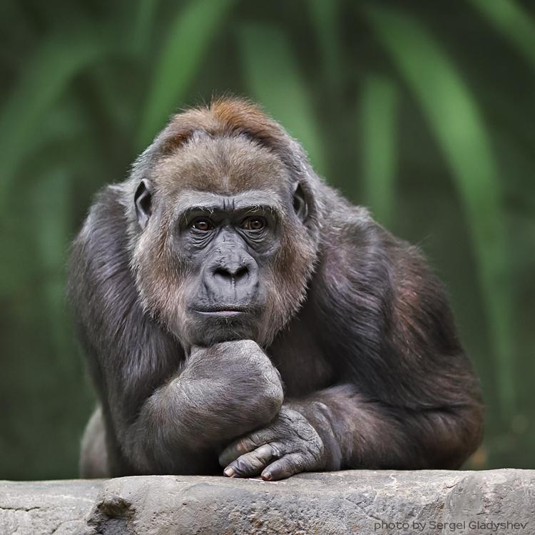 как фотографировать в зоопарке