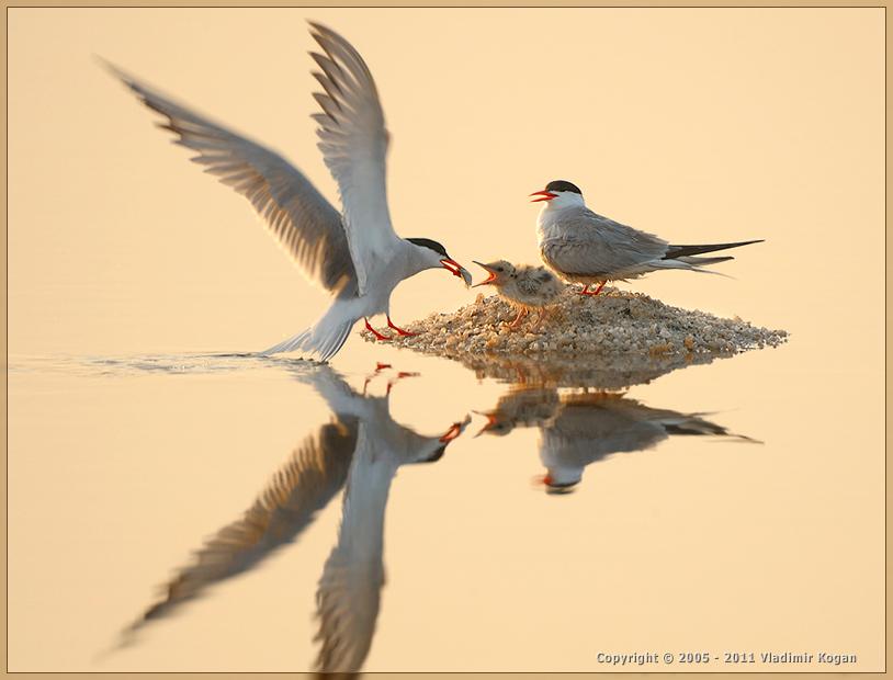 фотографии птиц с отражением