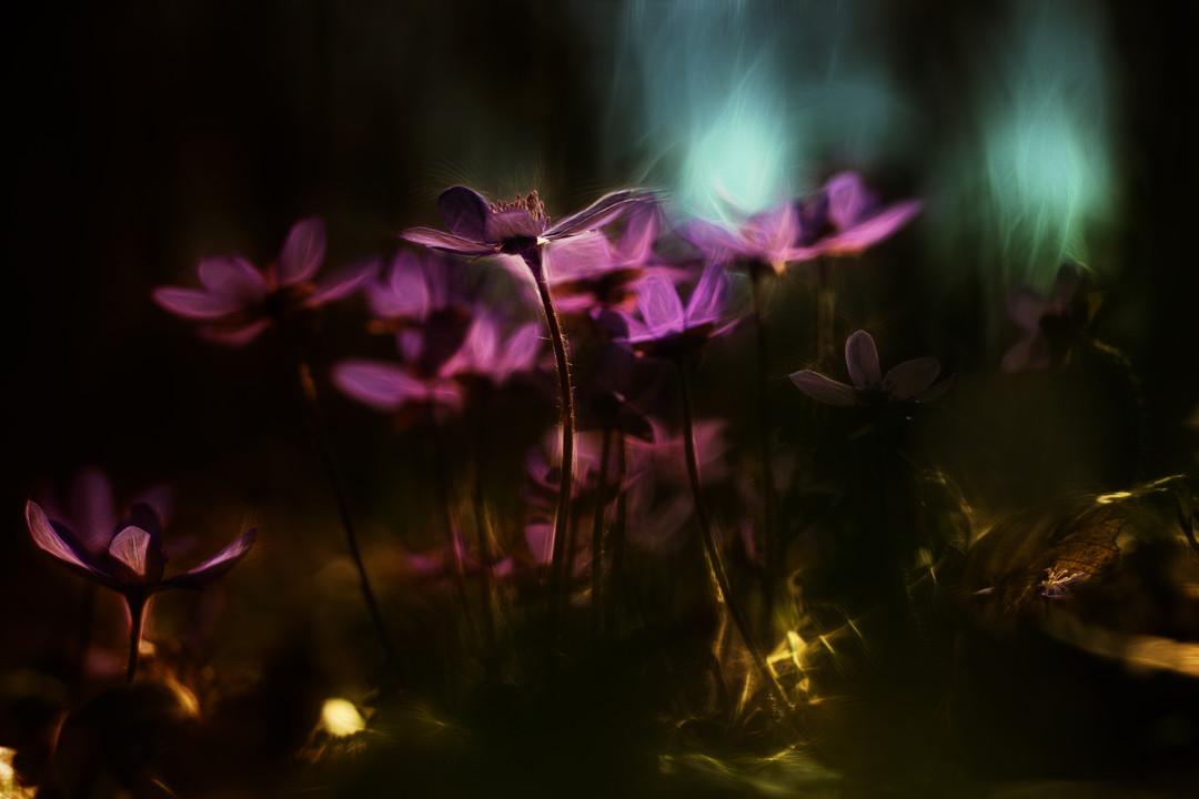 красивые фотографии цветов как сделать