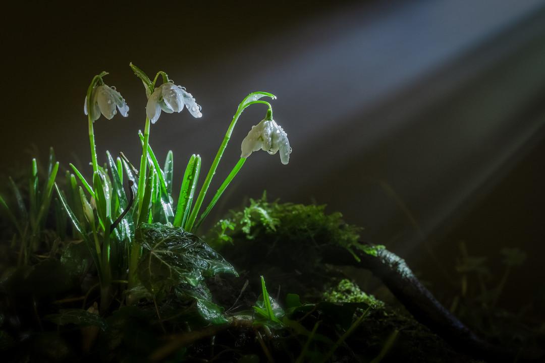 фотографии цветов в лесу