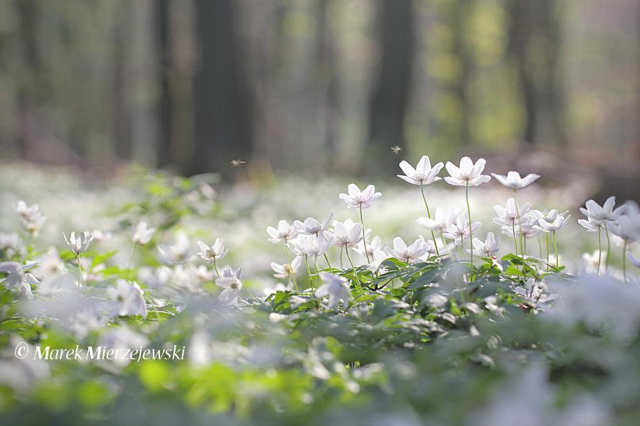 как фотографировать цветы в лесу