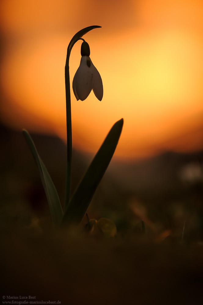 когда фотографировать цветы