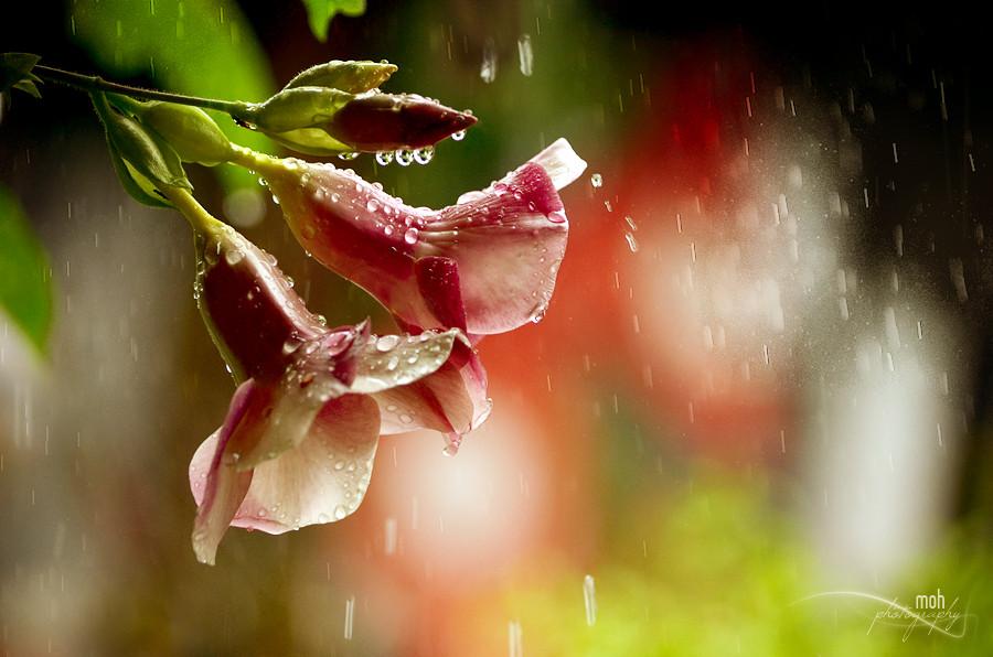 красивые фотографии цветов в дождь