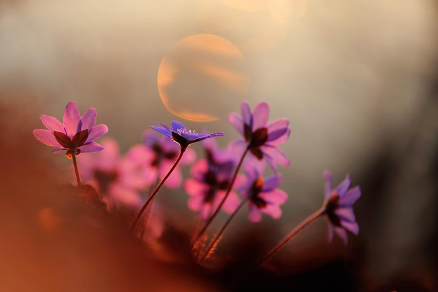 лучшее время для фотографии цветов
