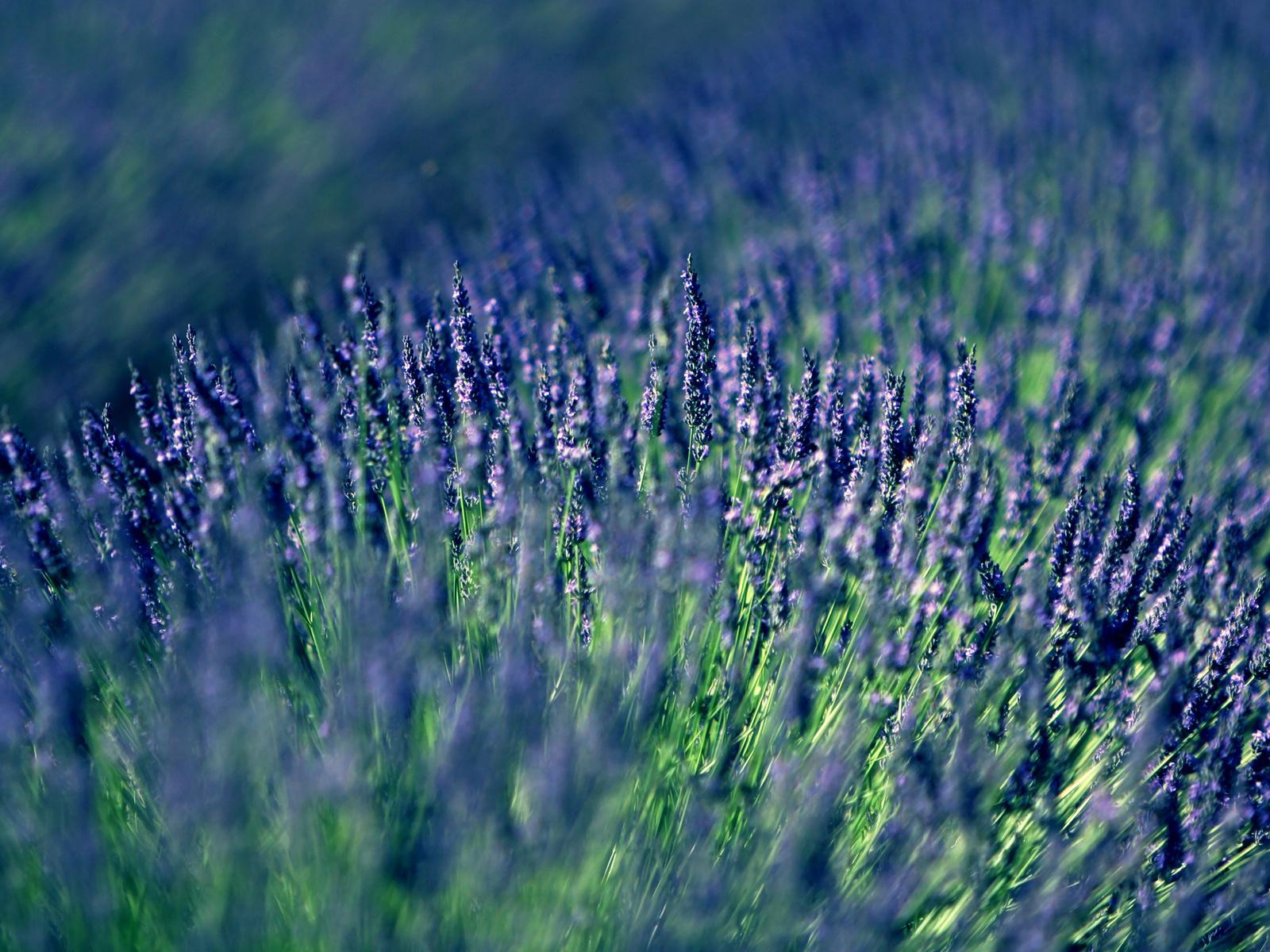 цветы на ветру как правильно снимать