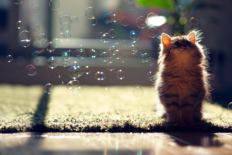 как сфотографировать мыльный пузырь