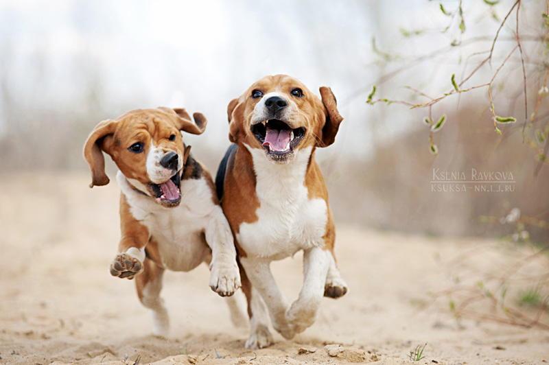 фотографии животных в движении